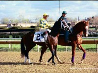 Illinois Derby 2004